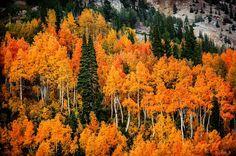 Photo originally shared by Photography Decathlonon on Google+  #landscapephotography #autumn #fall #landscape