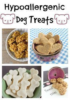 Looking for amazing hypoallergenic dog treat recipes for your pooch? How about four of our favorites? Try these out and your dog will be thrilled! #HypoallergenicDog