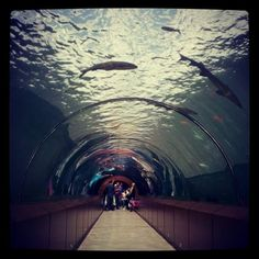 Photograph Tunnel Aquarium by burak karaca on 500px