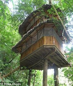 Community: Friends and investors have helped build a total of five individual treehouses