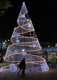 christmas trees with lights photography