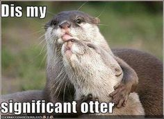 significant otter :)
