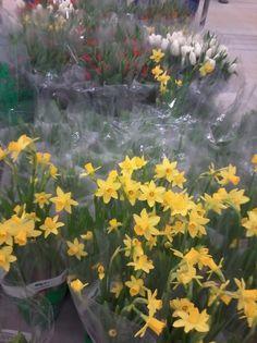 Kukkia Kestävät Ulkona pitkään