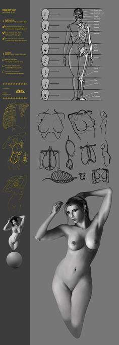 Human Body Torso Study42 CW by JustIRaziel.deviantart.com on @deviantART