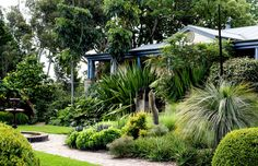 Michael Cooke. The house entry is framed by lush mixed plantings of Gymea lily (Doryanthes excelsa), grass trees (Xanthorrhoea spp), massed aloes (Aloe spp.) and more. Hampton Garden, Lush Garden, Palm Garden, Tropical Garden, Garden Bed, Beach Gardens, Coastal Gardens, Design Files, Potager Garden