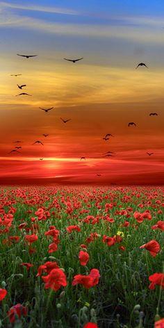 Lest we forget Beautiful Landscape Wallpaper, Beautiful Landscapes, Beautiful Gardens, Beautiful Nature Pictures, Amazing Nature, Beautiful Places, Beautiful Sky, Animals Beautiful, Beautiful Rose Flowers
