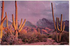 desert landscape out of space venus cactus