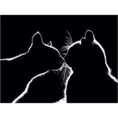 Shadows // kitty kiss