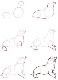 Drawings Learn to draw: Seal - Graphic / Illustration - Art Tutorial - Animal Sketches, Animal Drawings, Drawing Sketches, Pencil Drawings, Drawing Ideas, Easy Animals, How To Draw Animals, Drawing Techniques, Learn To Draw