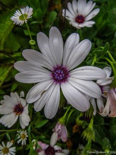 Flower with 12 Diamonds Credit: Kamal Bennani