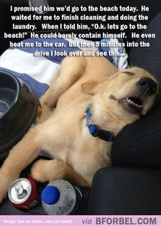 Dogs are just like kids…
