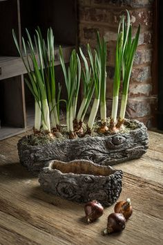 Vagabond Vintage Cement Log Planter - Set of Shaped Concrete Pots with Bark-like Detailing and sold in one large and one small. Product Description Large Dimensions: x x Small Dimensions: x x SKU: CE-BOIS Brand: Vagabond VintageKokedama un toqu Cement Planters, Concrete Pots, Concrete Crafts, Stamped Concrete, Garden Landscape Design, Garden Landscaping, Log Planter, Plant Crafts, Papercrete