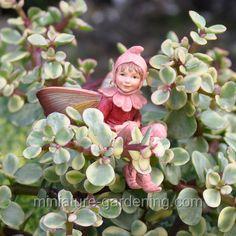 Fairy Gallery - Miniature Gardening