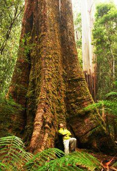 Australia's 18 top camping spots - Australian Geographic Outdoor