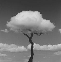 Clouds Tree. Via: Menace