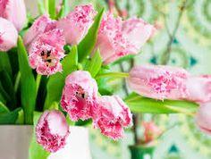 Bildresultat för rosa tulpaner