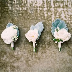 groom boutonniere: white spray rose with dusty miller **Do you like a stem wrap or a green curly cue? **Stem wrap can be white, blush, silver or grey satin.