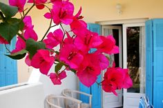 Samos and the beautiful flowers