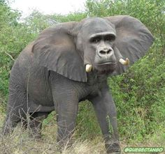 Gorillaphant. | 28 Unsettling Animal Mashups That Should Probably Never Have Happened