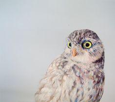 Owl Drawings John Pusateri-1