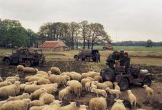 Nekaf's by Crosswolf.nl