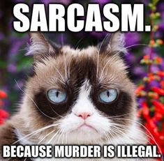 Here's a gift for Grumpy cat lovers.Hopefully you love to Grumpy cat.Well, here's collection of some Grumpy cat Memes Monday that are so funny. Grumpy Cat Quotes, Funny Grumpy Cat Memes, Cat Jokes, Funny Cats, Funny Jokes, Grumpy Cats, Angry Cat Memes, Funny Minion, Cute Animal Memes