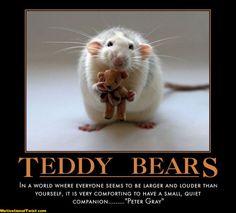 motivational teddy bears