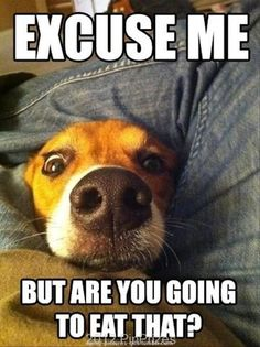 Beagle on Pinterest | Beagles, Funny Cats and Beagle Puppies