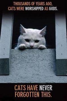Cats have long memories