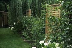 GardenScape - Landscaping for Privacy / Shrubs and trellises beside a weeping willow form an effective screen in this yard.