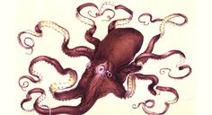 The octopus that ruled London