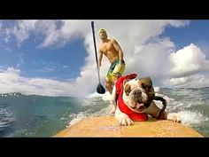 PEOPLE ARE AWESOME (PETS EDITION) | SURFING & SKATEBOARDING DOGS! - YouTube