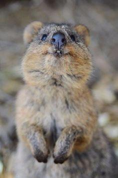 Wombat ❤️❤️