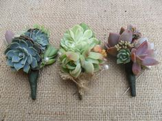 Succulent Cuttings - perfect for making boutonnieres or adding to the bouquet