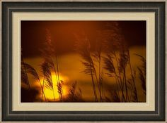 Nature Print featuring the photograph Brome On The Platte by Jeff Phillippi