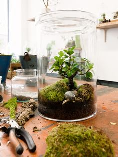 Make your house greener - with a terrarium Make your own biotope - You . : Make your house greener - with a terrarium Make your own biotope - You . Mini Terrarium, Terrarium Plants, Glass Terrarium, Succulent Terrarium, Terrarium Ideas, Moss Garden, Succulents Garden, Garden Plants, Indoor Plants