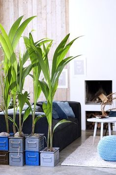 Note how they stacked boxes to raise some plants taller Indoor Trees, Indoor Plants, Indoor Garden, Coin Bar, Papyrus, Cosy Corner, Pinterest Home, Green Plants, House Plants