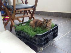 Cama de pasto para tu gato DIY