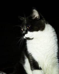 """Gefällt 9 Mal, 1 Kommentare - Erich von Allmen (@evonallmen) auf Instagram: """"Nachtschwärmer 😼 #home ..."""" Cats, Instagram Posts, Animals, Gatos, Animales, Kitty Cats, Animaux, Animal Memes, Cat Breeds"""