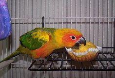some great recipes for birds. my cockatiel LOVES bird bread.