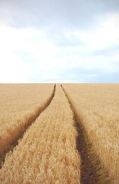 infinite fields of gold