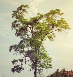 Woww!! #Colombia #nature #sky #sun #summer #beach #beautiful #pretty #sunset #sunrise #blue #flowers #night #tree #twilight #clouds #beauty #light #cloudporn #photooftheday #love #green #skylovers #dusk #weather #day #red #iphonesia #mothernature Summer Beach, Blue Flowers, Dusk, Twilight, Sunrise, Weather, Clouds, Night, Pretty