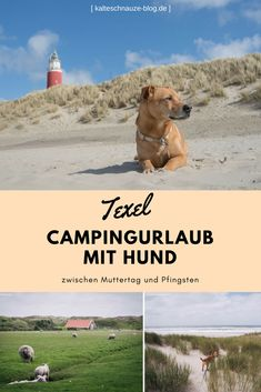 Camping und Erlebnisse mit Hund: So habe ich Texel zwischen Muttertag und Pfingsten erlebt.