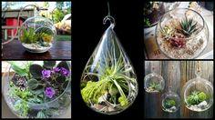 plantsforterrarium