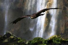 """© Blende, Helmut Büchner, Am #Wasserfall, Thema: """"Wasser"""" #Fotowettbewerb #Landschaftsfotografie #Tierfotografie"""