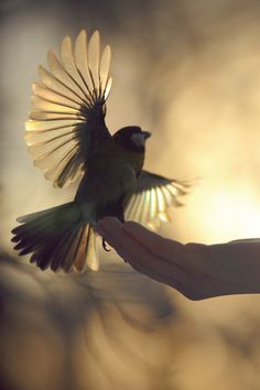 bird. flying, getting ready to fly                                                                                                                                                      More
