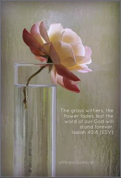 The grass withers, the flower fades, but the word of our God will stand forever. ~ Isaiah 40:8 (ESV)