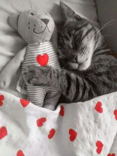 my baby sleeping with her baby I Love Cats, Crazy Cats, Cute Cats, Baby Animals, Funny Animals, Cute Animals, Kittens And Puppies, Cats And Kittens, Cat Dog