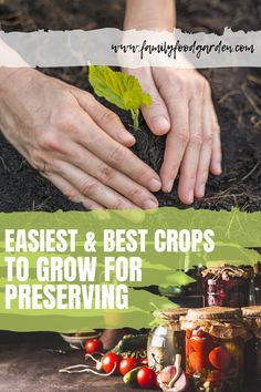 What are the best crops to grow for preserving? Preserving the harvest is rewarding & easier when you know the best crops for preserving for beginners. Although you do need to invest in certain equipment if you're preserving with canning, or a dehydrator for dehydrating, many crops can be just frozen. Check out on this pin the best crops for preserving for full details. #crops ##preserving #gardening #cropstogrow #gardencrops Beef Recipes, Cooking Recipes, Healthy Recipes, Blog Food, Diy Garden Projects, Garden Ideas, Garden Inspiration, Healthy Fruits, Winter Garden