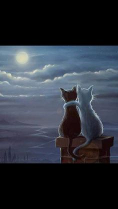 Enjoying the evening, black and white cat painting, enjoying the moon on the roof top. that would be my cats! Esta imágen me recordó a Luna y Artemis de Sailor Moon. Jeremiah Morelli — Just Two Cats on a Roof, 2014 Just two cats on a roof Something qu I Love Cats, Crazy Cats, Cute Cats, Funny Cats, Photo Chat, Moon Art, Cat Drawing, Cat Art, Cats And Kittens